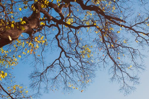 Free stock photo of blue sky, fall color, tree