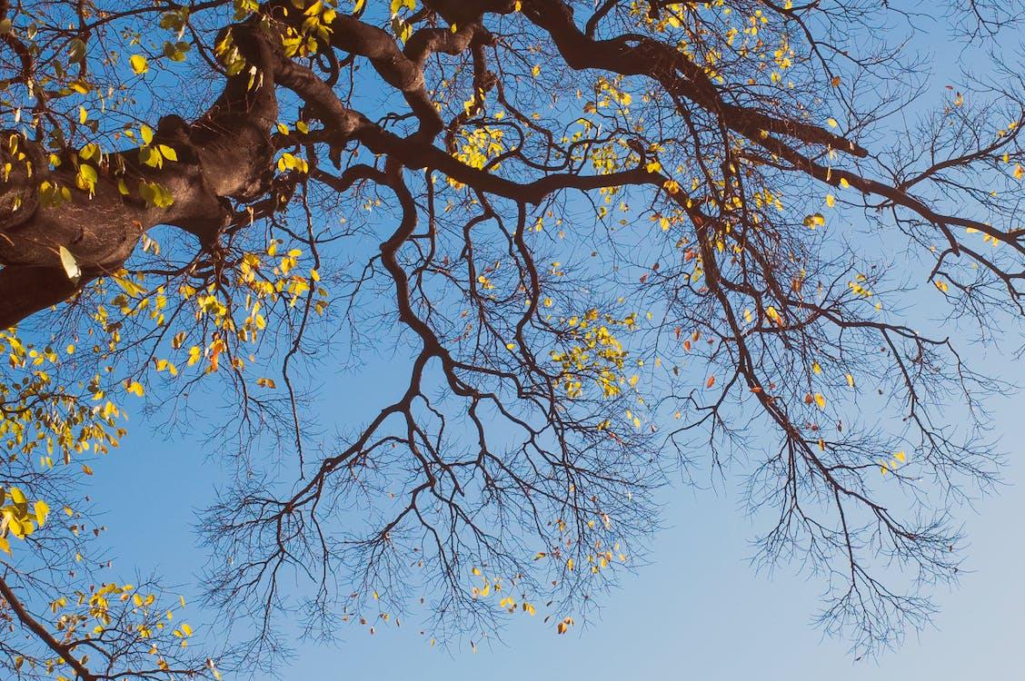 arbre, cel blau, color de la tardor
