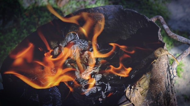 Free stock photo of wood, firewood, fire, hot
