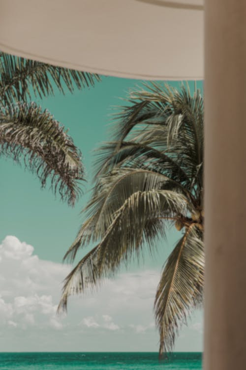 Free stock photo of island, mexico, ocean