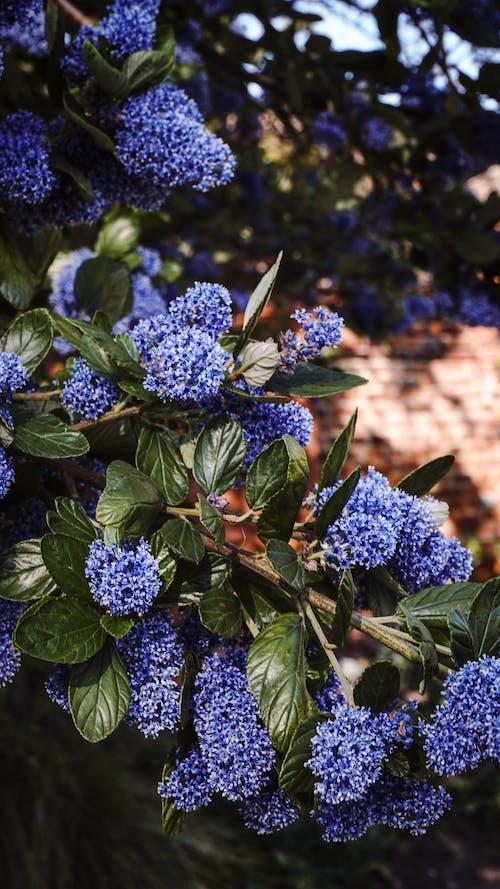 Gratis stockfoto met blauwe bloemen, bloemen, natuur, paarse bloemen