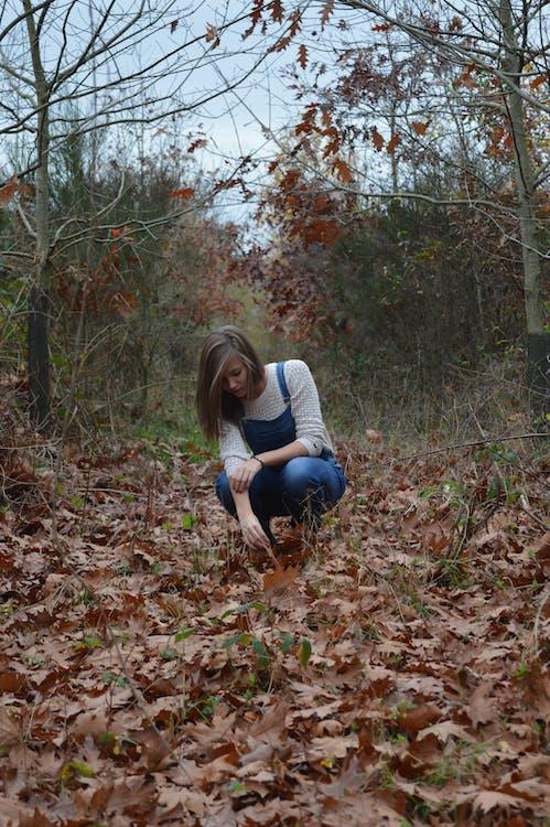 blade, efterår, falde