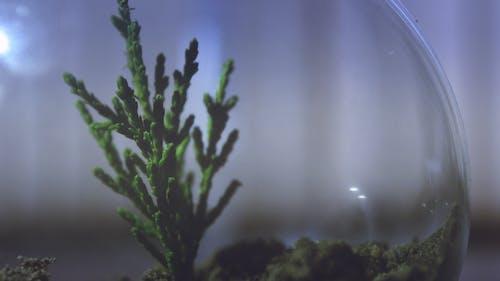 açık, bitki, Biyoloji, bulanıklık içeren Ücretsiz stok fotoğraf