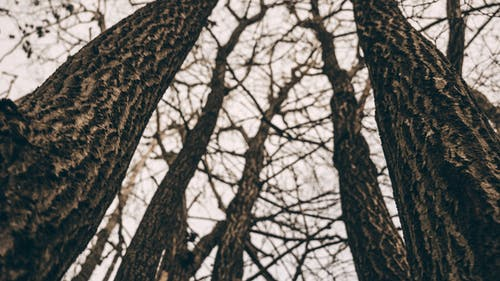 Worm View of Bare Trees