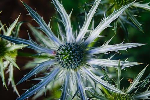 Free stock photo of flower, garden, macro
