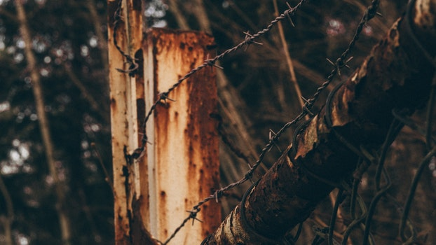 Free stock photo of wood, light, dark, forest