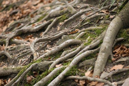Ilmainen kuvapankkikuva tunnisteilla alla, earyth, ekologia, ekosysteemi