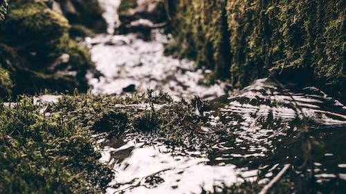 Imagine de stoc gratuită din frig, gripă, iarbă, iarnă