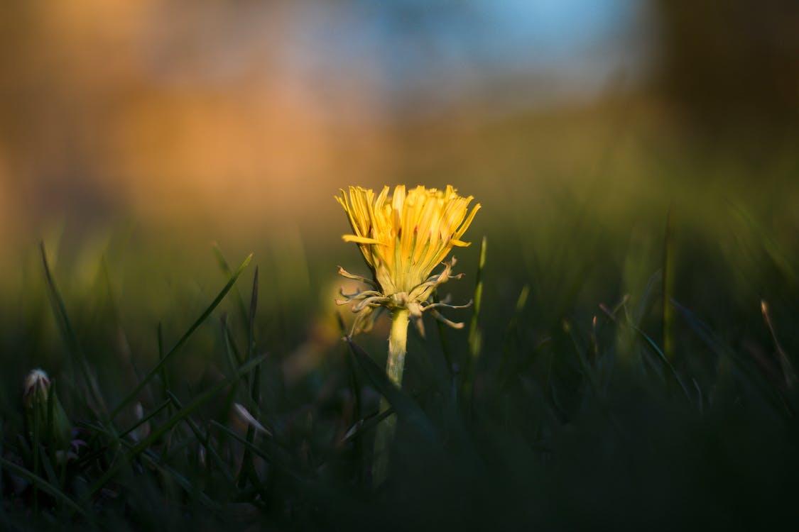 altın saat, çiçek, çim içeren Ücretsiz stok fotoğraf