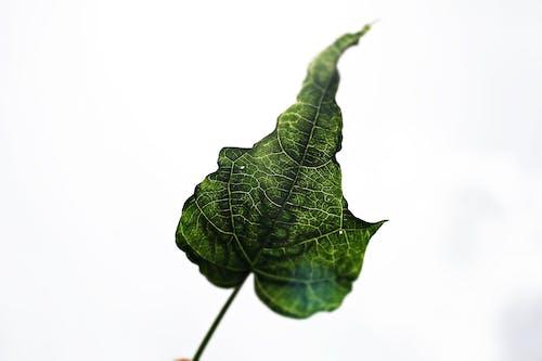 Gratis stockfoto met bladeren, natuur