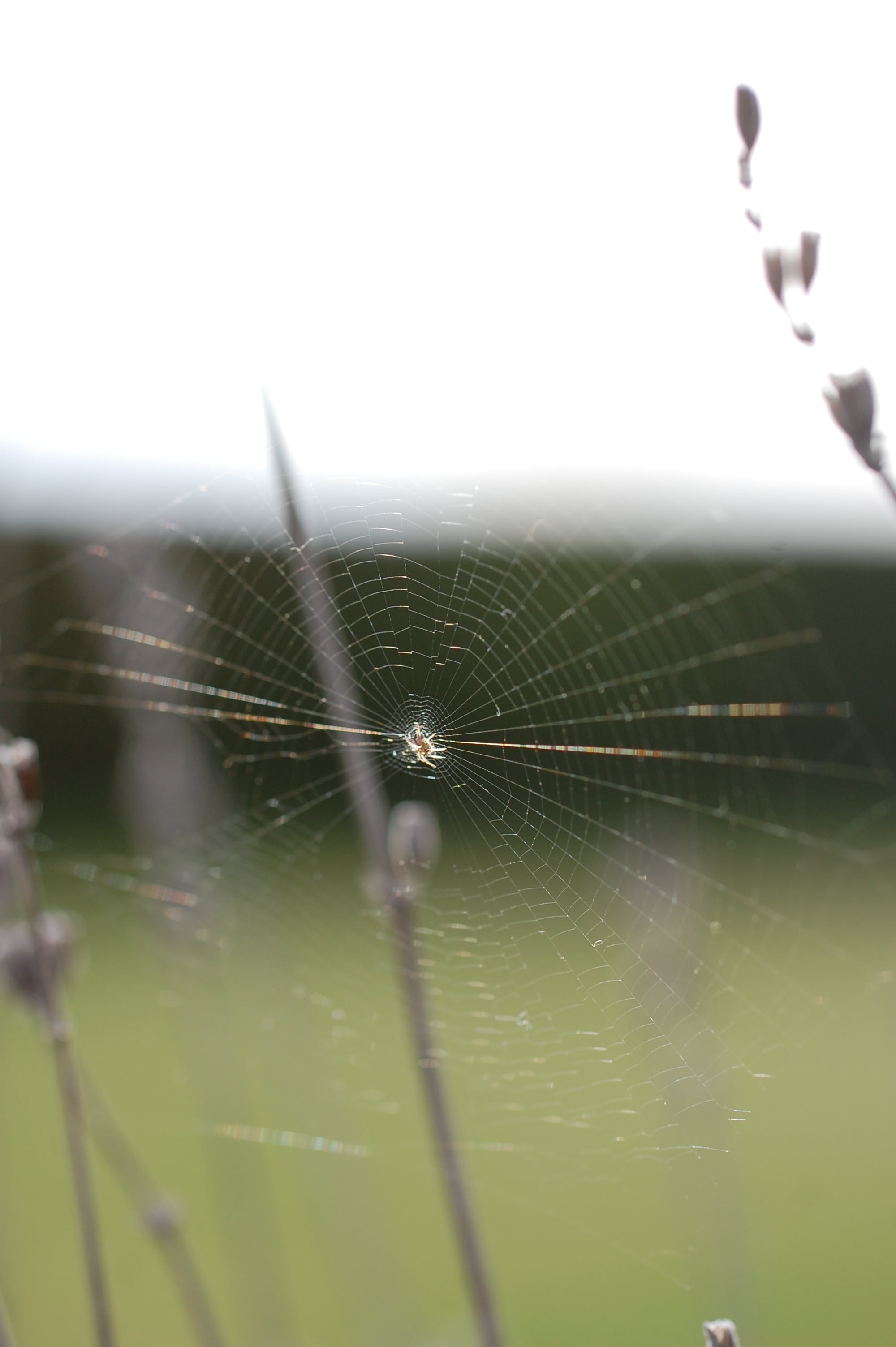 Free stock photo of blur, close up, macro, nature