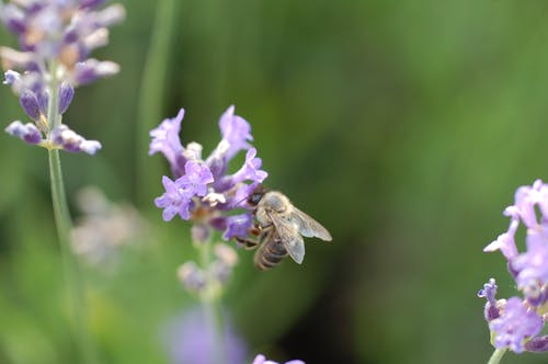 Free stock photo of animal, bee, close up, flower