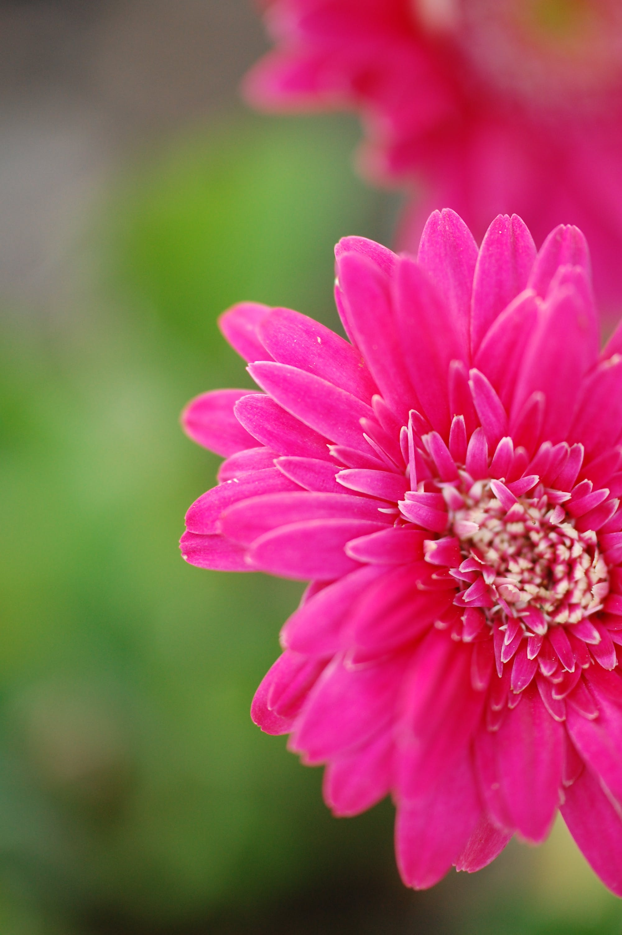 Free stock photo of blur, close up, flower, flowers