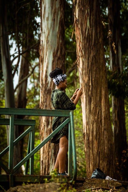 Foto d'estoc gratuïta de a l'aire lliure, arbres, baranes metàl·liques, boscos