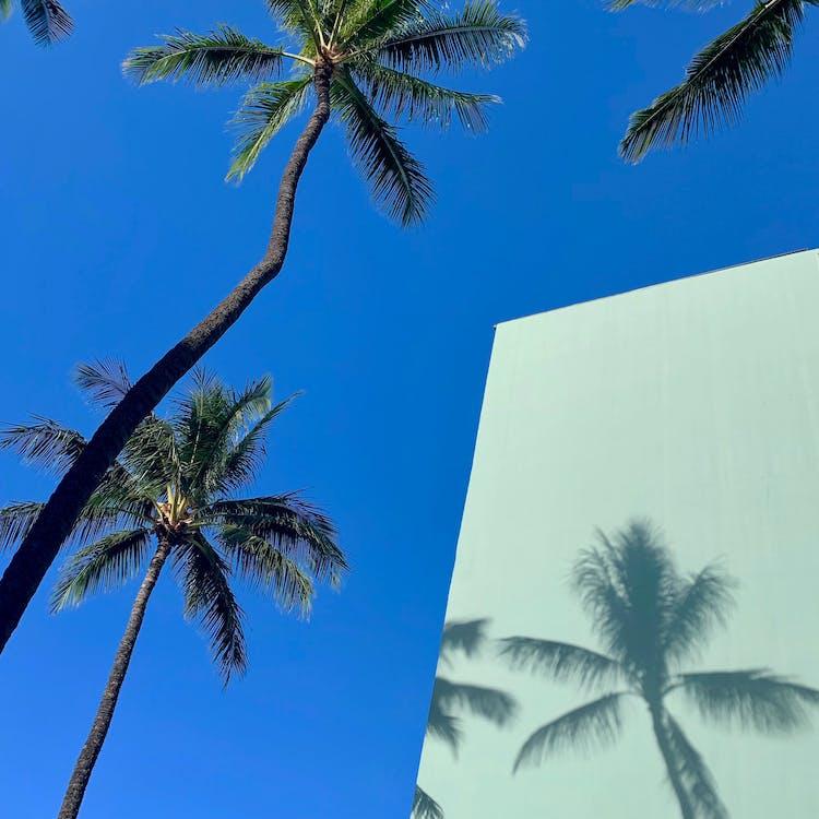 arbres, bleu, ciel