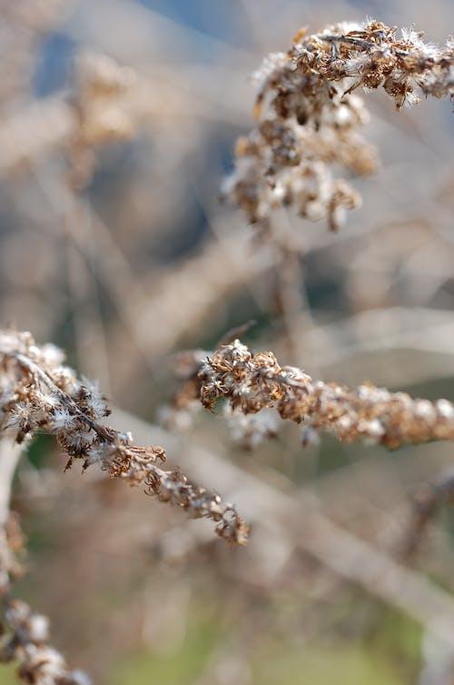 Free stock photo of blur, brown, close up, garden