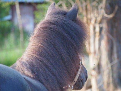 Free stock photo of animal, animals, beautiful, cute