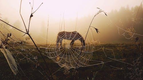 喇叭花, 晨光, 有雾的早晨, 有霧 的 免费素材照片
