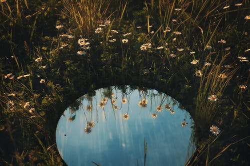 Round mirror on a field of daisies
