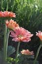sunny, flowers, summer