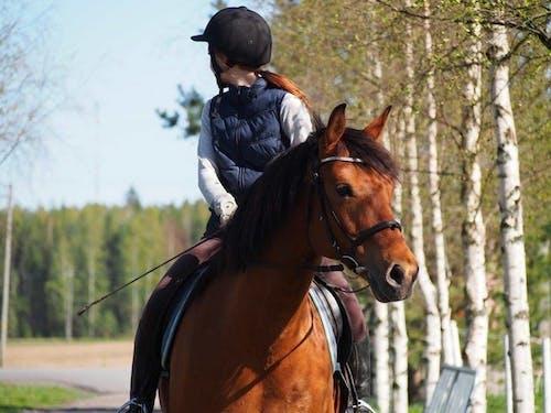 Photos gratuites de à cheval, animal, arbres, brun