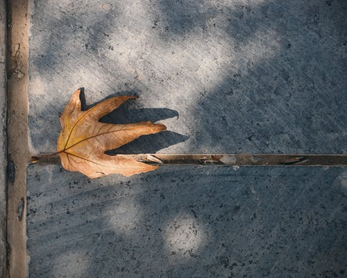 Free stock photo of fall leaves, Tehran