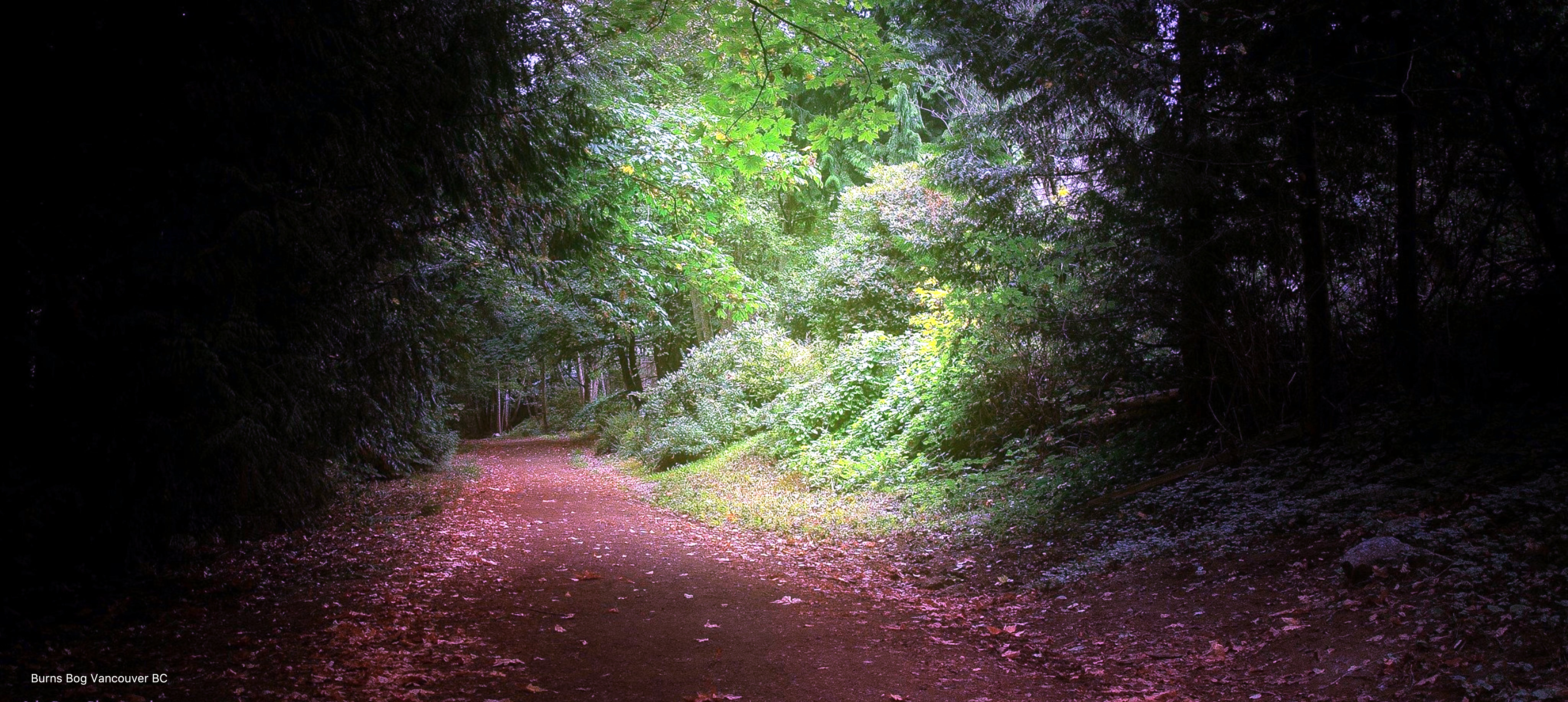 Free stock photo of pathway fall autumn trees