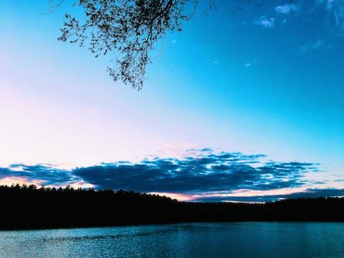 iphone, naturee içeren Ücretsiz stok fotoğraf