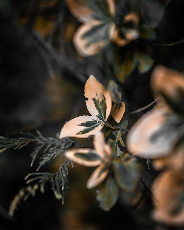 나뭇잎, 매크로, 식물