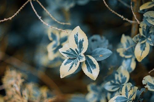 나뭇잎, 매크로, 이파리의 무료 스톡 사진