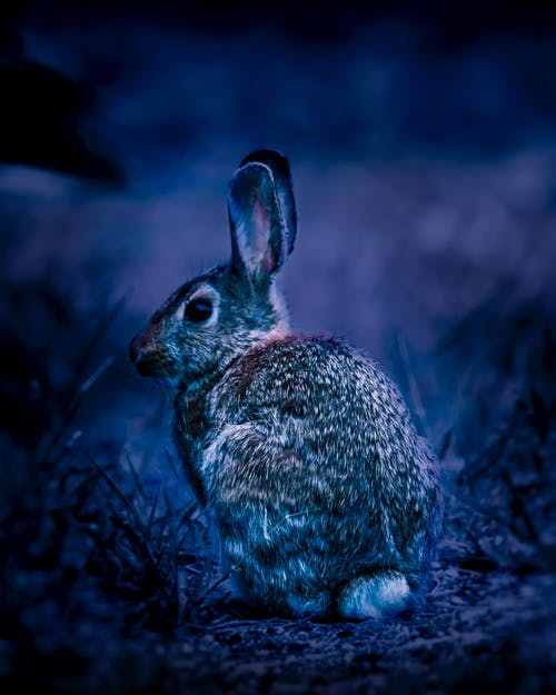 Free stock photo of blue tones, rabbit, reworked, varriation