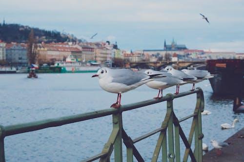 Free stock photo of birds, boat, castle, flag