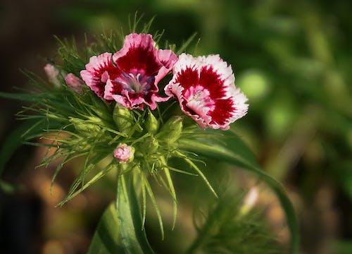 Ilmainen kuvapankkikuva tunnisteilla kasvikunta, kukat, lähikuva, luonto