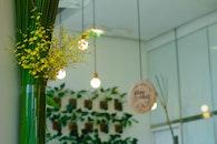 light, flowers, house