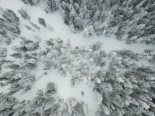 Free stock photo of canada, drone, snow, wood