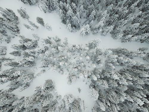 Безкоштовне стокове фото на тему «Деревина, дрон, Канада, сніг»