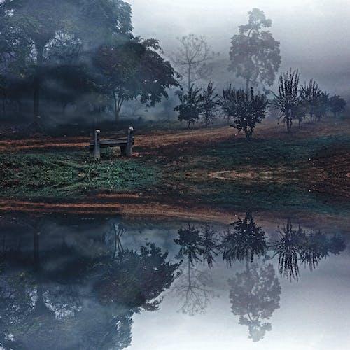 Foto profissional grátis de água, árvores, cênico, garoa