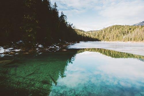 Foto profissional grátis de água, árvores, atraente, bonito
