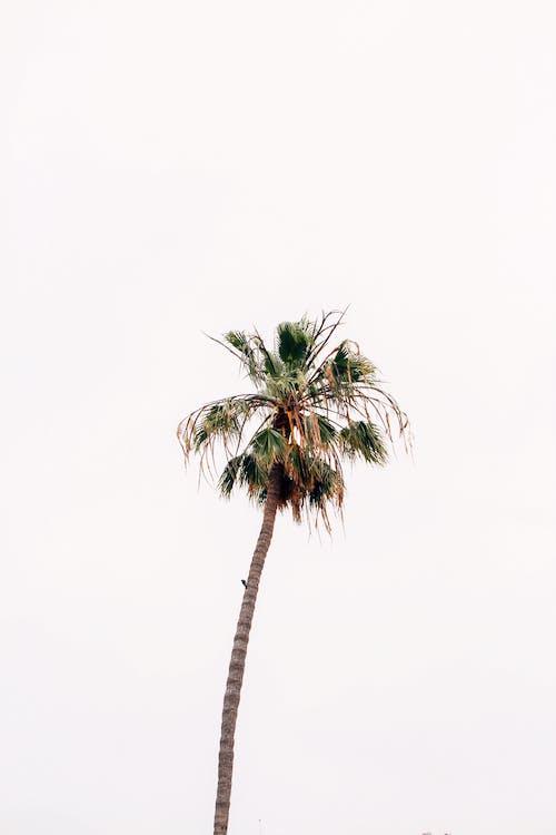 cestování, dovolená, exotický