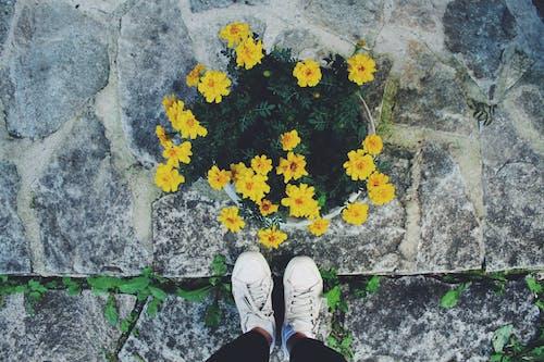 サマータイム, フラワーズ, 夏, 夏の花の無料の写真素材