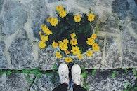 flowers, summer, yellow