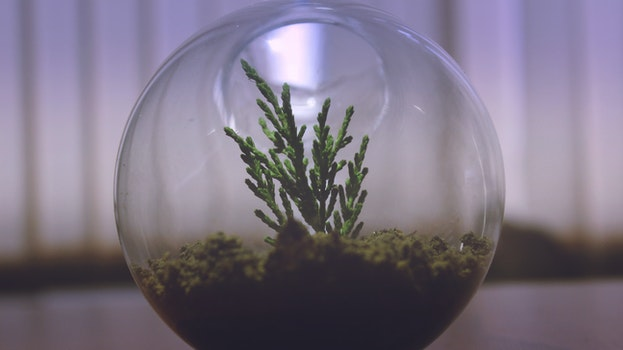Free stock photo of glass, plant, round, decoration