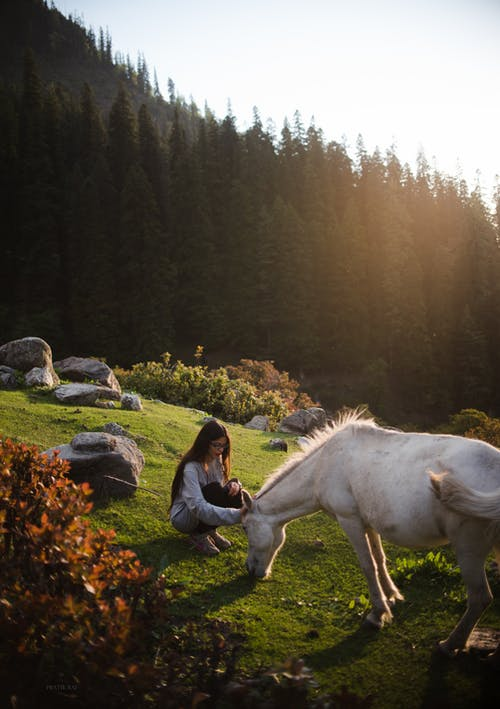 Woman Sitting Beside White Horse