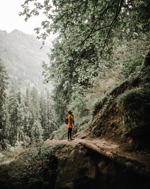 Foto d'estoc gratuïta de arbres, aventura, boscos, Camí