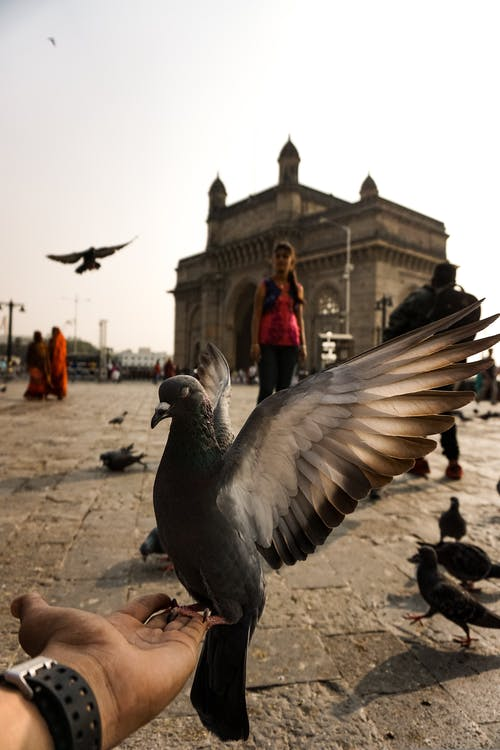 Free stock photo of birds, city, explore, morning