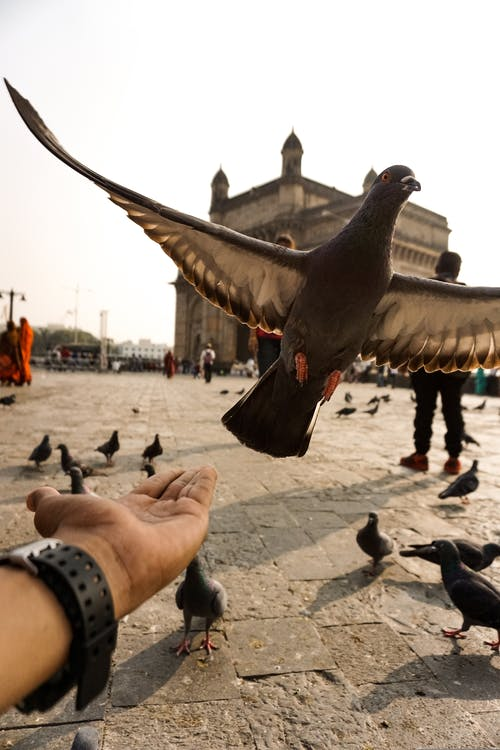 Free stock photo of birds, city, explore, fill