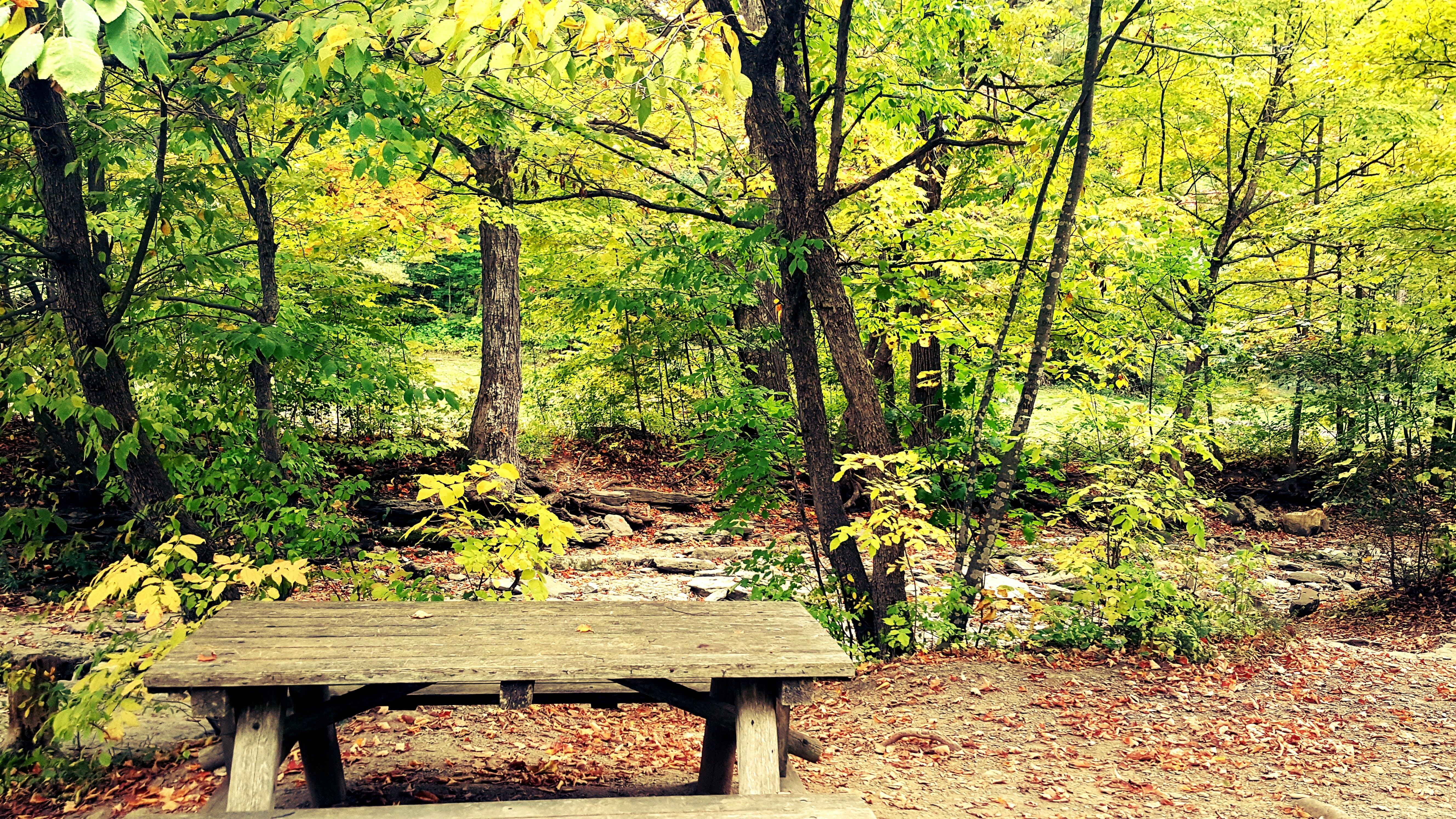 Free stock photo of autumn colours, autumn leaves, bench, fall foliage