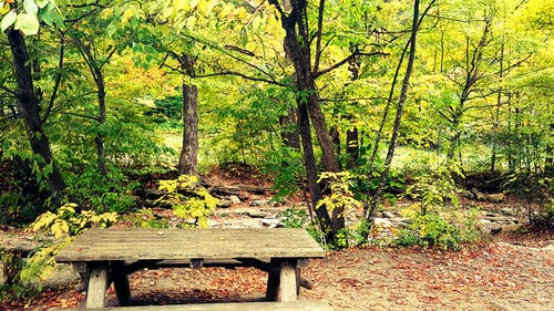 Free stock photo of bench, fall foliage, fall leaves, forest
