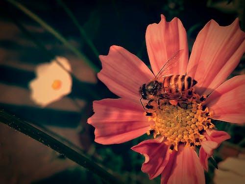 Ingyenes stockfotó 4k-háttérkép, asztali háttérkép, gyönyörű virág, háttérkép témában