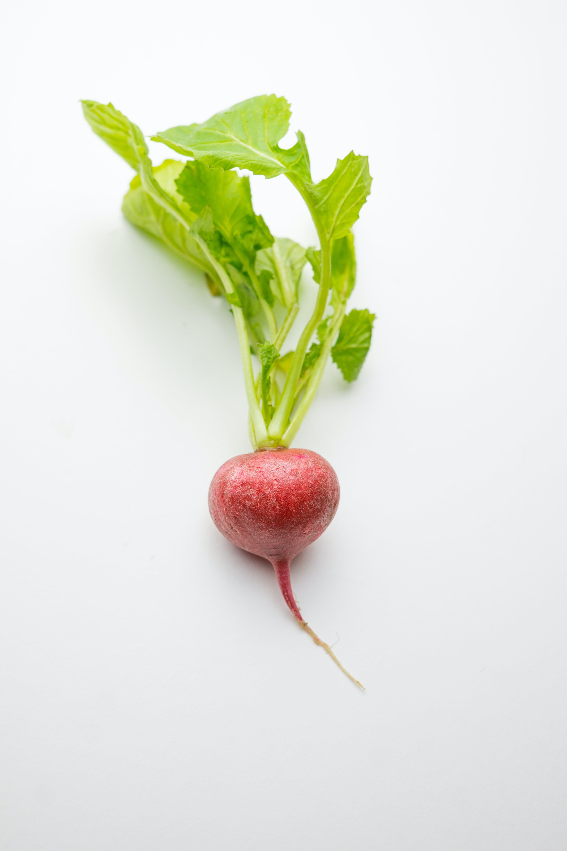21 Spring Vegetable Garden Plants Perfect For Spring Growing Season